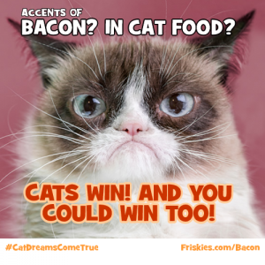 cats win
