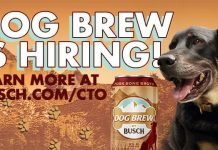 Anheuser Busch Beer Dog Brew Contest 2021